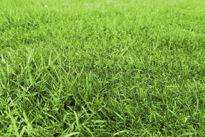 trawy zieleni łąka zdjęcie royalty free