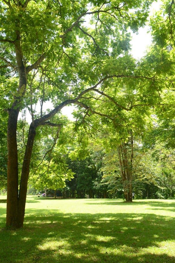 trawy zieleni drzewo obraz stock