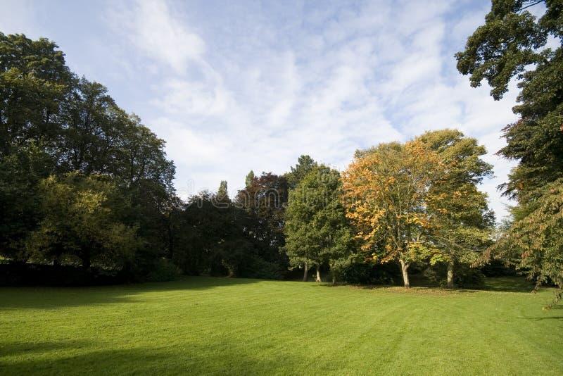 trawy zieleni krajobrazu drzewa obrazy stock