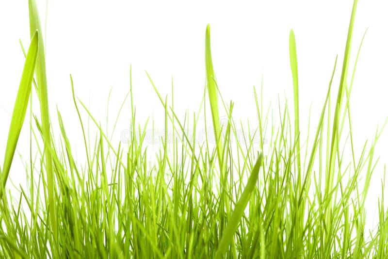 trawy zieleni odosobniony biel zdjęcia stock