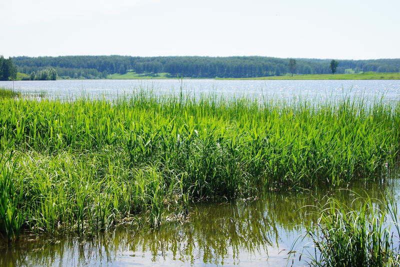 trawy zieleni woda obrazy royalty free