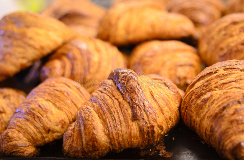 Tray of croisant. Delicious tray of croissant ready to eat stock image