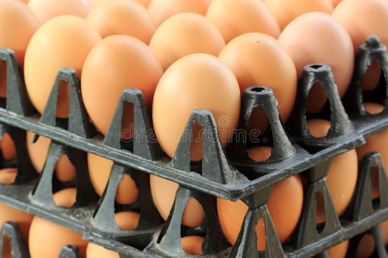 Tray Eggs de plastique photo libre de droits
