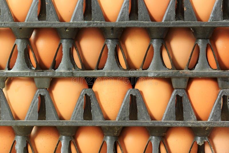 Tray Eggs de plastique photographie stock