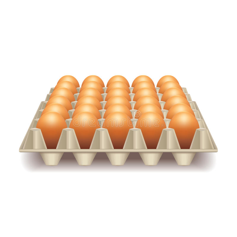 Tray with eggs on white vector. Tray with eggs on white photo-realistic vector illustration vector illustration