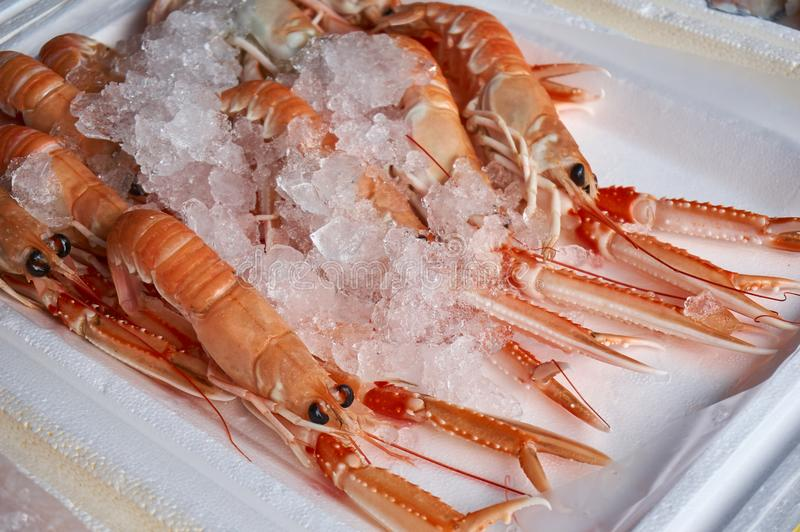 Tray of fresh Scottish langustines Nephrops norvegicus royalty free stock photography