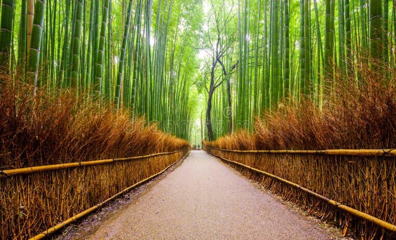 Trayectoria al bosque de bambú, Arashiyama, Kyoto, Japón foto de archivo libre de regalías