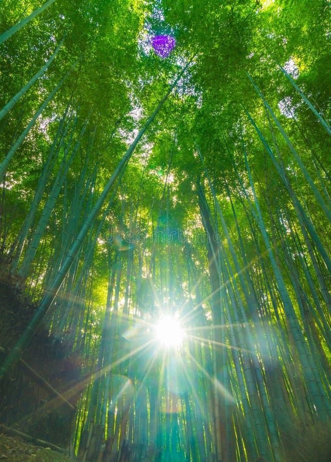 Trayectoria al bosque de bambú en Arashiyama en Kyoto imagenes de archivo