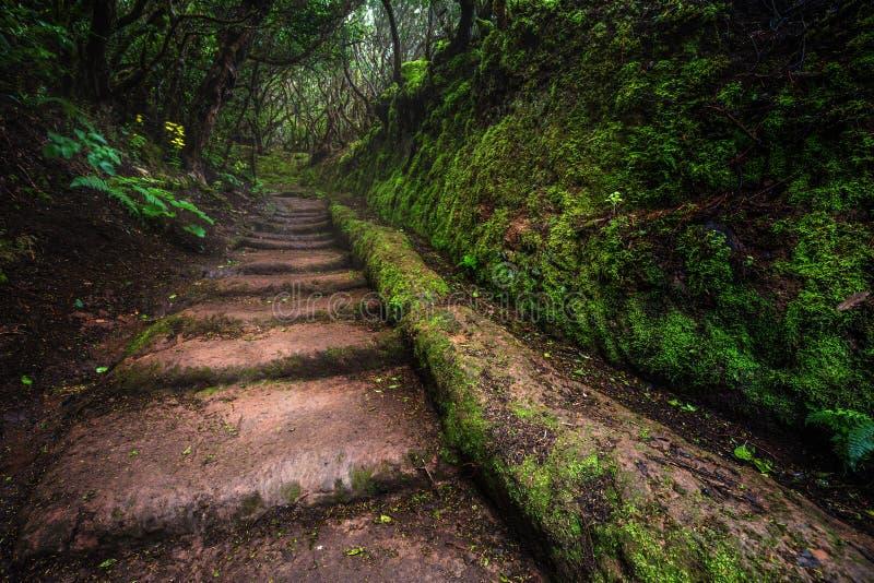 Trayectoria con las escaleras en selva tropical de Anaga en Tenerife foto de archivo libre de regalías