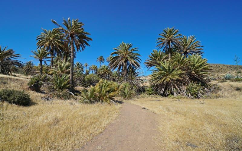 Trayectoria con las palmeras Cabo de Gata Nijar Spain fotografía de archivo