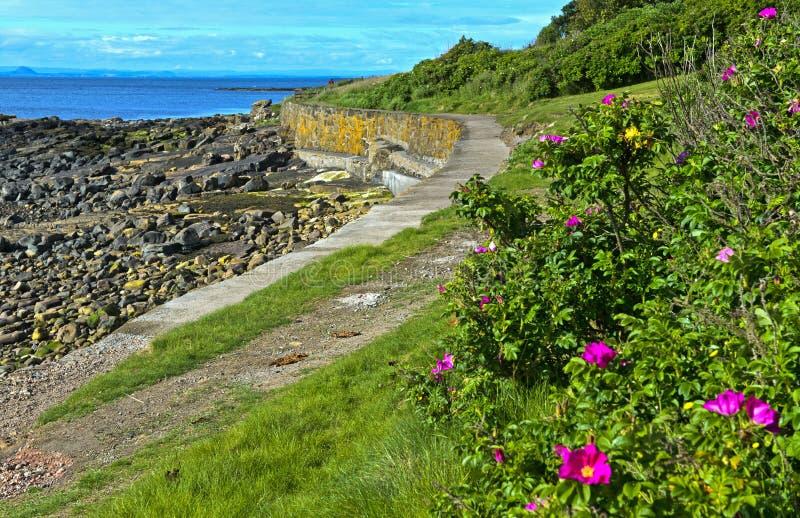 Trayectoria costera del Fife cerca de Crail fotografía de archivo libre de regalías