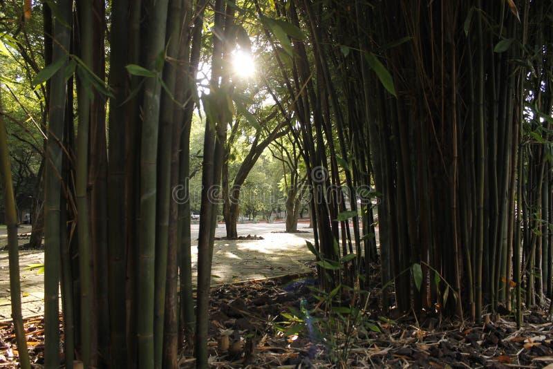 Trayectoria de bambú fotografía de archivo libre de regalías