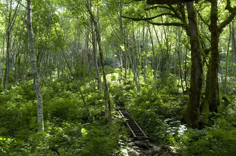 Trayectoria de bosque de la montaña imagenes de archivo