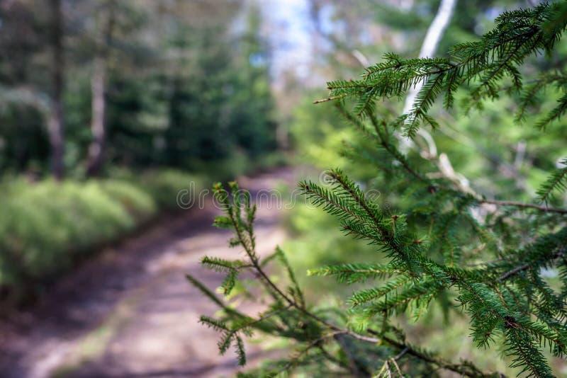 Trayectoria de bosque en las montañas polacas fotos de archivo