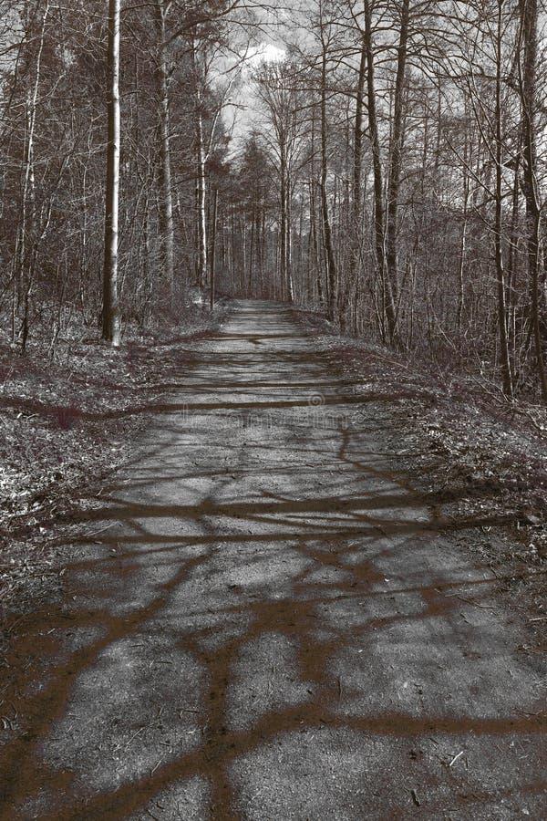 Trayectoria de bosque en tono suave de la sepia imágenes de archivo libres de regalías