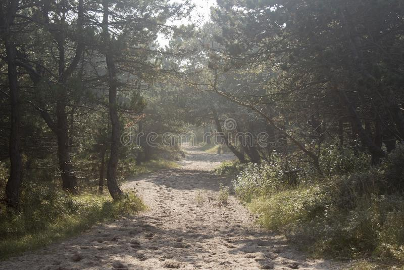 Trayectoria de la arena que lleva en el bosque fotos de archivo libres de regalías