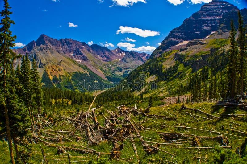 Trayectoria de la destrucción de la avalancha al lado de Belces marrón en Rocky Mountains fotos de archivo libres de regalías