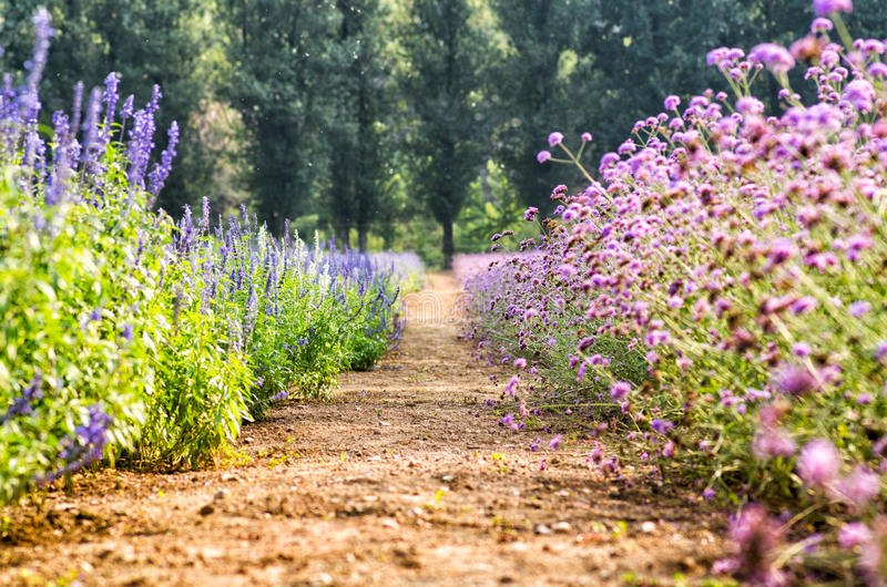 Trayectoria de la granja entre los céspedes brillantes de la flor fotografía de archivo