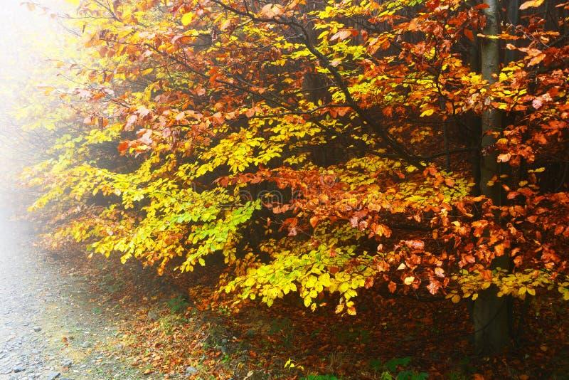 Trayectoria de la montaña en colores del otoño fotografía de archivo libre de regalías