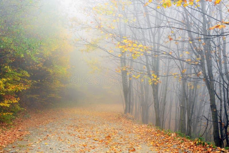 Trayectoria de la montaña en colores del otoño fotos de archivo