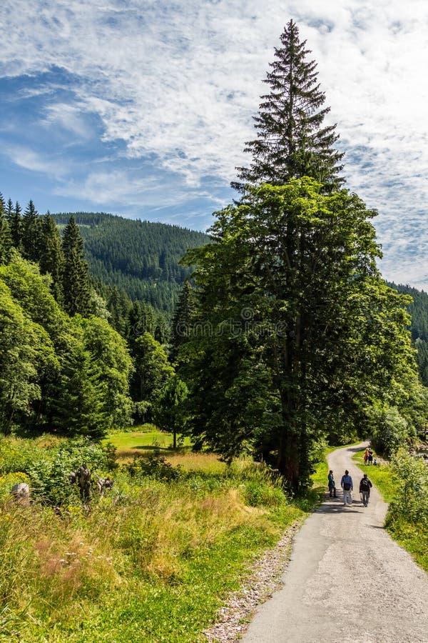Trayectoria de la montaña en el parque nacional Krkonose imagen de archivo libre de regalías
