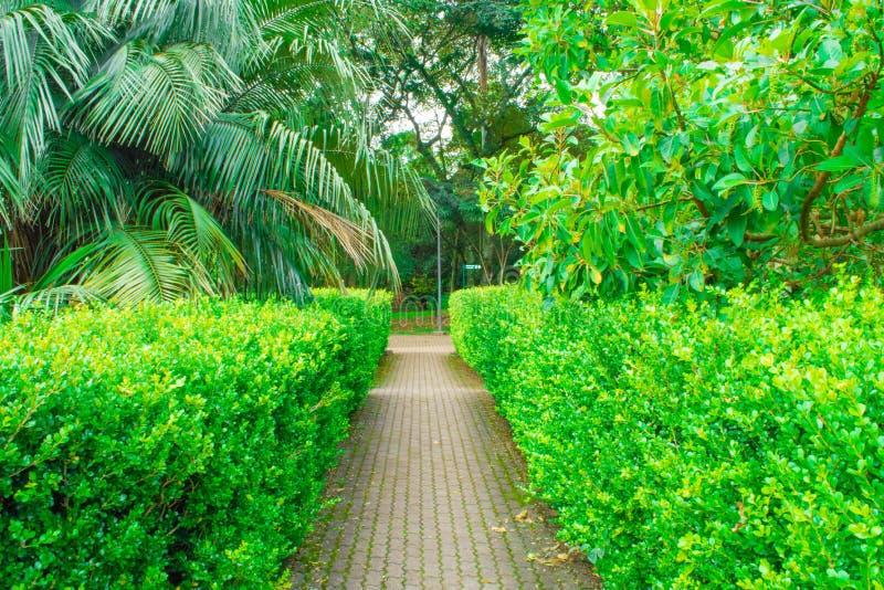 Trayectoria de la naturaleza con los arbustos y las palmas fotografía de archivo