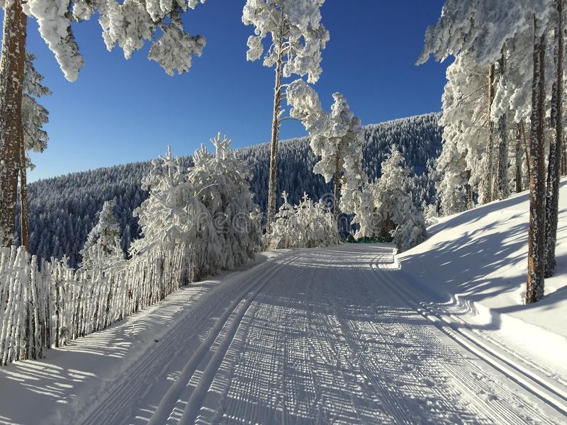 Trayectoria de la nieve para el esquí de fondo fotografía de archivo libre de regalías