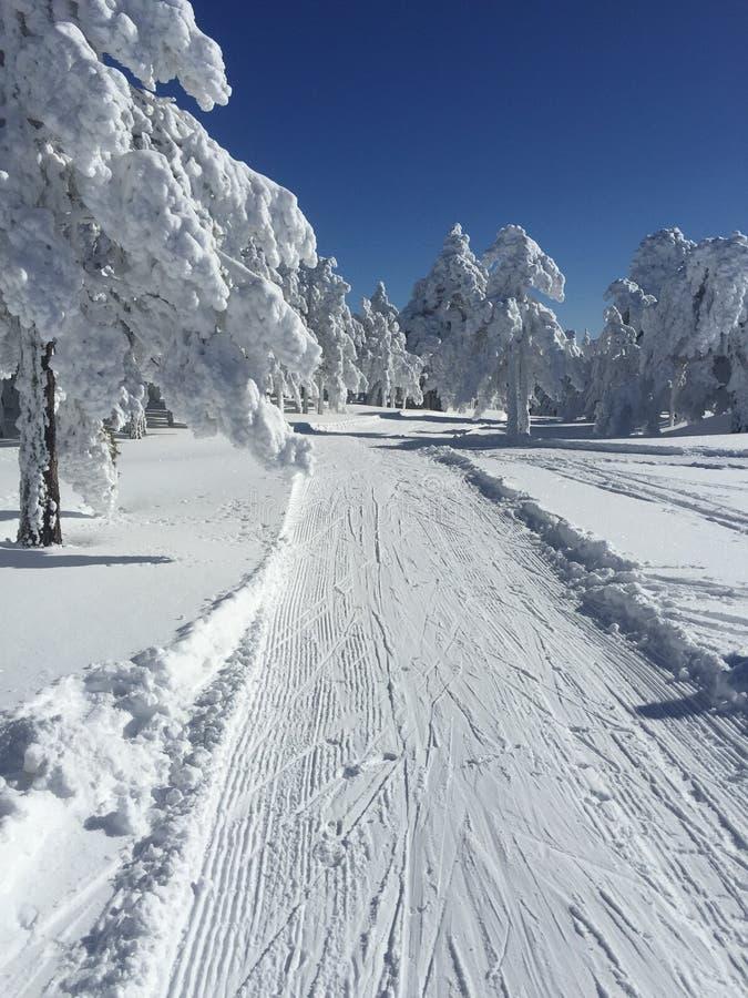 Trayectoria de la nieve para el esquí de fondo fotos de archivo