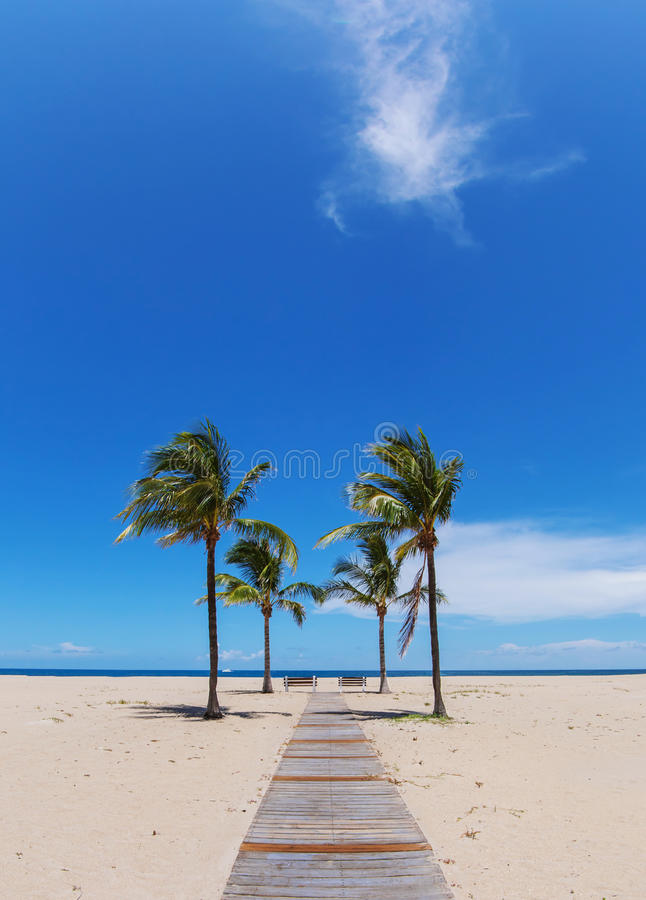 Trayectoria de la playa con las palmas imagenes de archivo