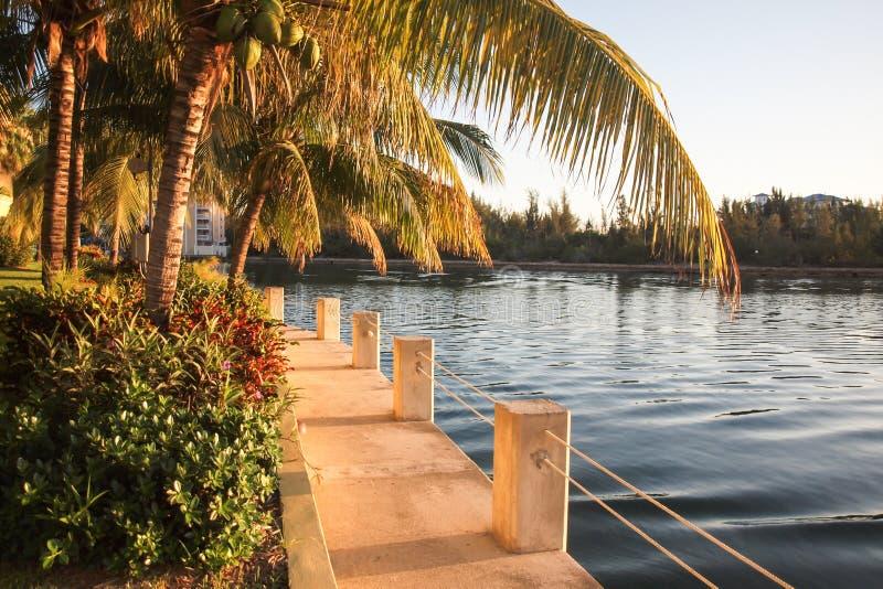 Trayectoria de la puesta del sol de Bahamas por el agua y las palmeras foto de archivo libre de regalías