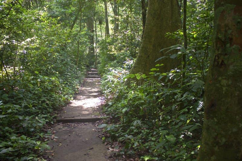 Trayectoria de la selva fotos de archivo