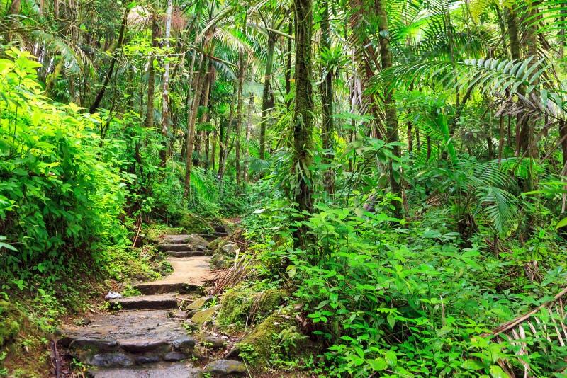Trayectoria de la selva fotografía de archivo