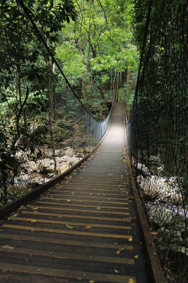 Trayectoria de la selva tropical foto de archivo libre de regalías