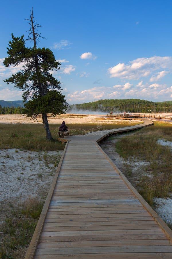 Trayectoria de madera en el parque nacional de Yellowstone, Wyoming, los E.E.U.U. foto de archivo libre de regalías