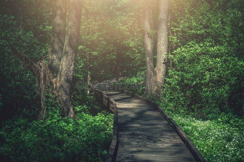 Trayectoria de madera, manera o calzada, pista de tablones en Forest Park en la luz del sol, concepto del viaje del verano, persp imagenes de archivo