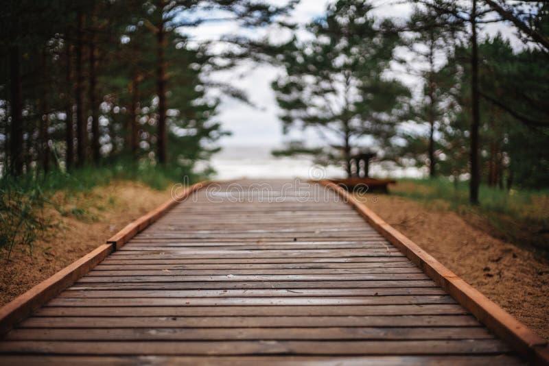 Trayectoria de madera para caminar en un bosque hermoso del pino fotos de archivo libres de regalías