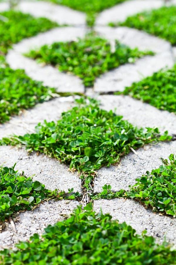 Trayectoria de piedra del paseo del bloque en el parque con la hierba verde foto de archivo