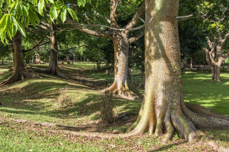 Trayectoria del árbol foto de archivo libre de regalías
