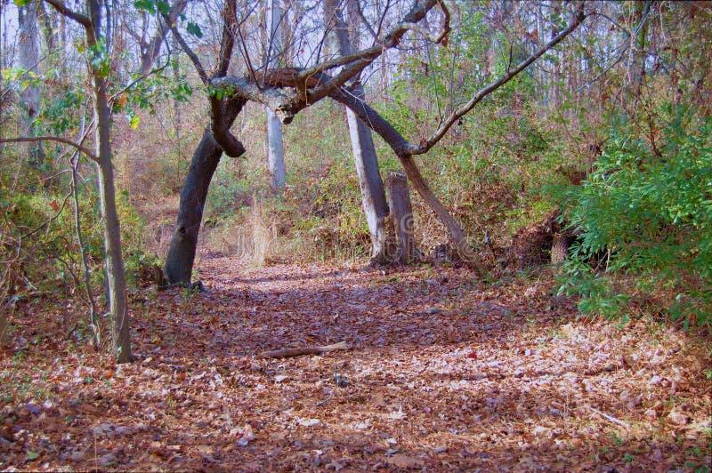 Trayectoria del árbol del arco foto de archivo libre de regalías