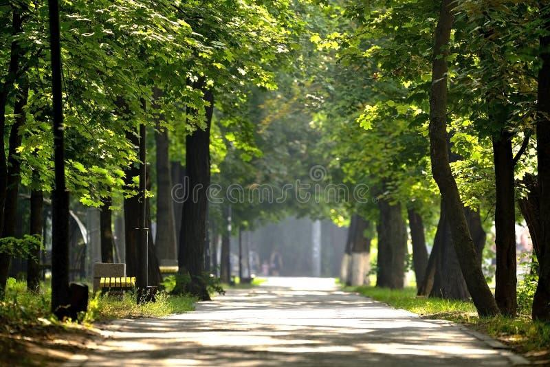 Trayectoria del carril de la calzada con los árboles verdes en parque de la ciudad Callej?n hermoso en parque imagenes de archivo