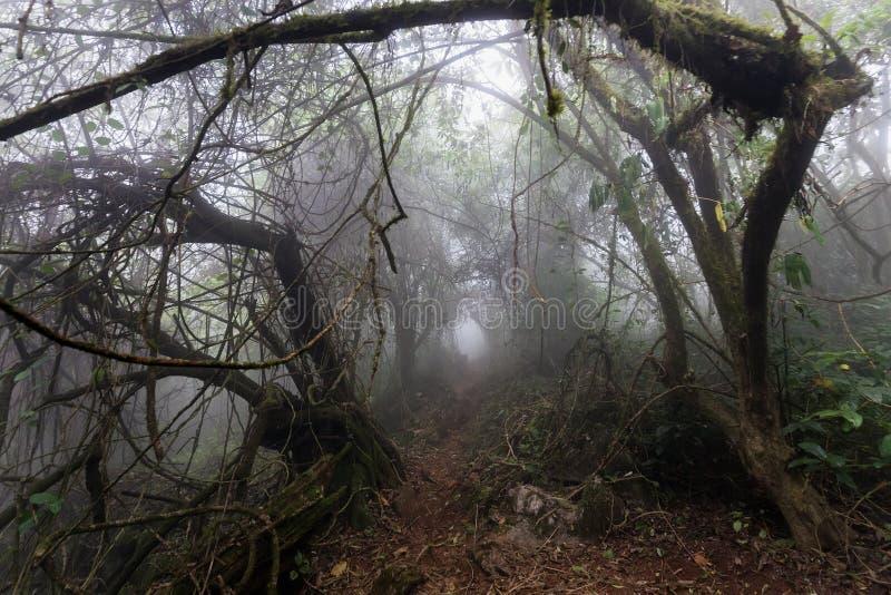 Trayectoria del horror en bosque foto de archivo libre de regalías