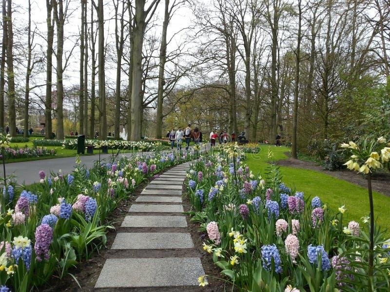 Trayectoria del jardín de las flores de la primavera foto de archivo