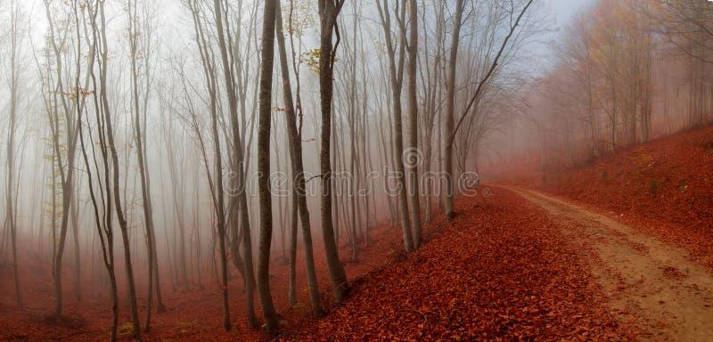 Trayectoria del otoño fotografía de archivo libre de regalías
