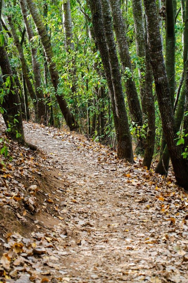 Trayectoria del otoño a través de árboles en bosque imágenes de archivo libres de regalías