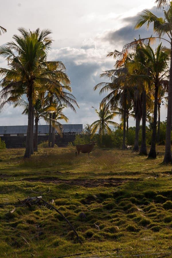 Trayectoria del parque del oeste nacional en Bali foto de archivo libre de regalías