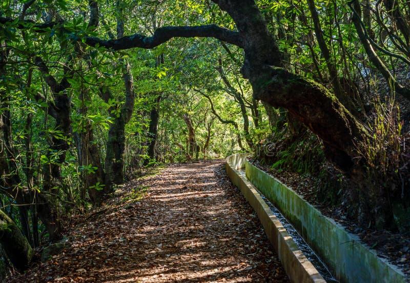 Trayectoria del paseo de Madeira Levada escénica imagen de archivo