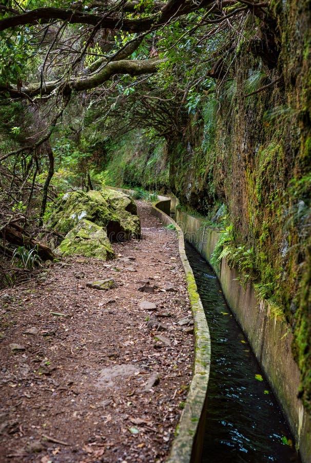 Trayectoria del paseo de Madeira Levada escénica imagen de archivo libre de regalías