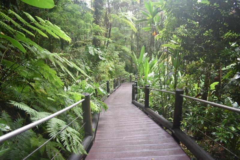 Trayectoria del paseo marítimo que lleva a través de una selva tropical tropical enorme imagen de archivo libre de regalías
