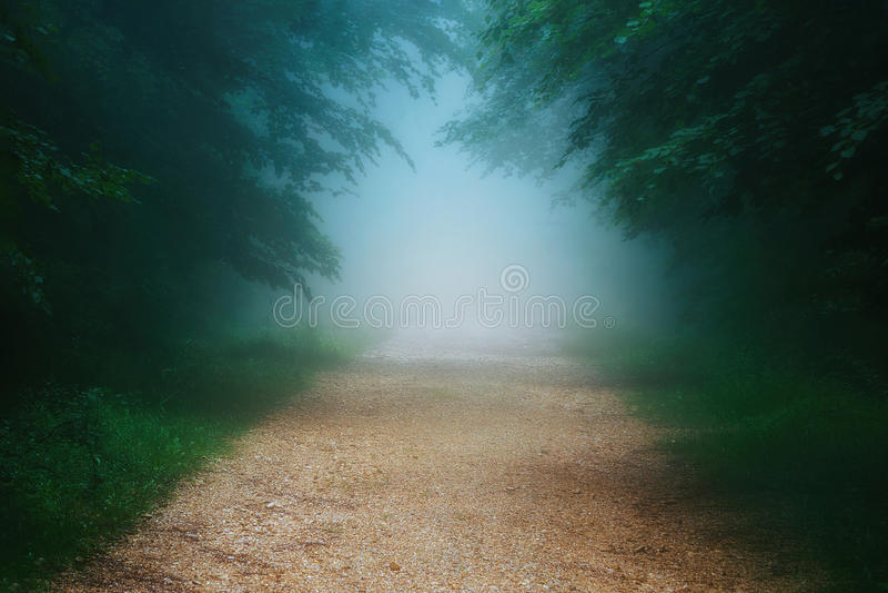 Trayectoria en bosque de niebla imagen de archivo