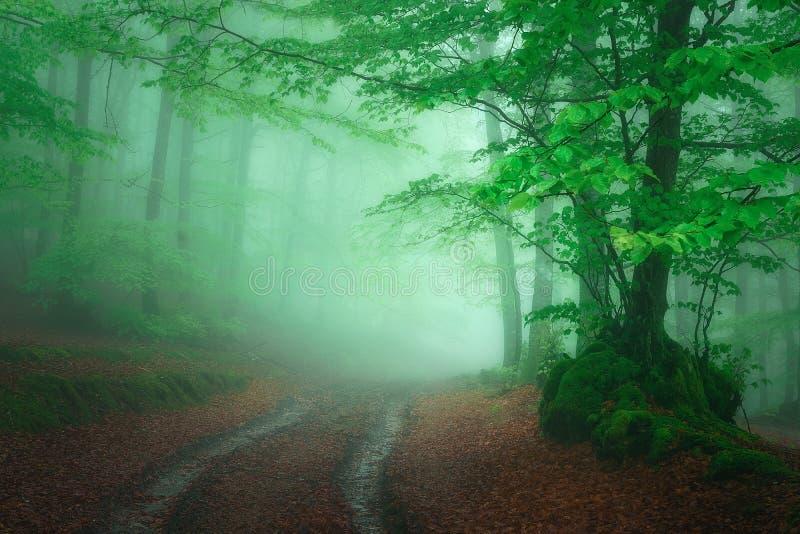 Trayectoria en bosque de niebla en la primavera fotos de archivo libres de regalías